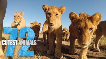 72 Cutest Animals (2016)