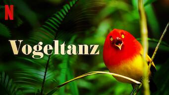 Vogeltanz (2019)